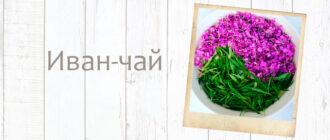 Иван-чай: полезные свойства и противопоказания для мужчин и женщин